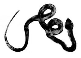 logo crapula edizioni sito