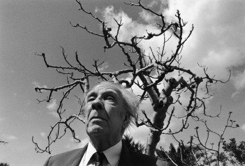 Borges albero