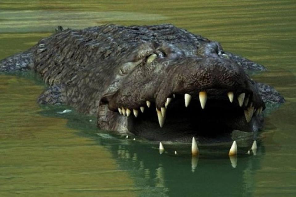 L'immortalità dei coccodrilli